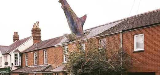 Shark in a roof