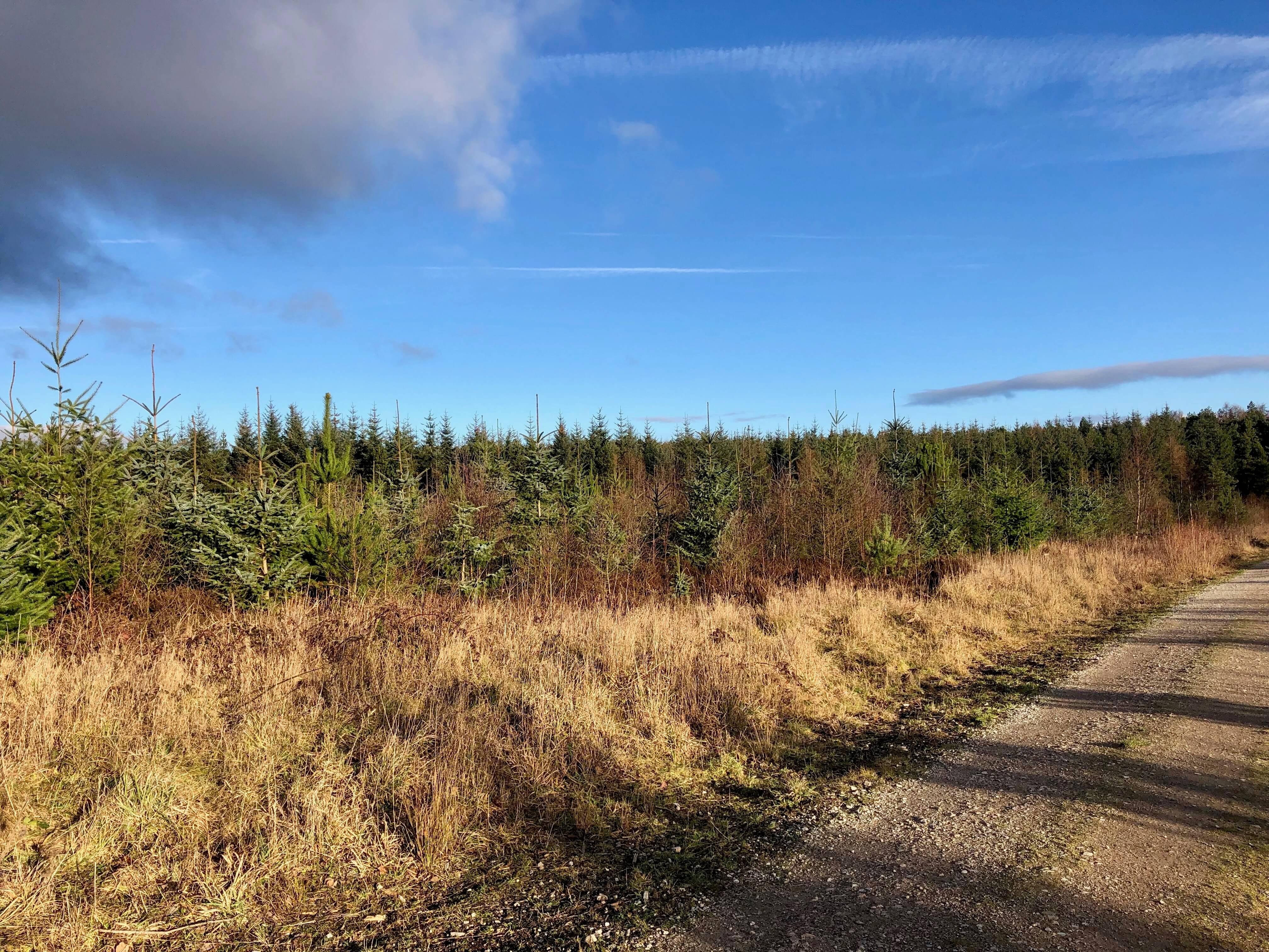 Farley Moor