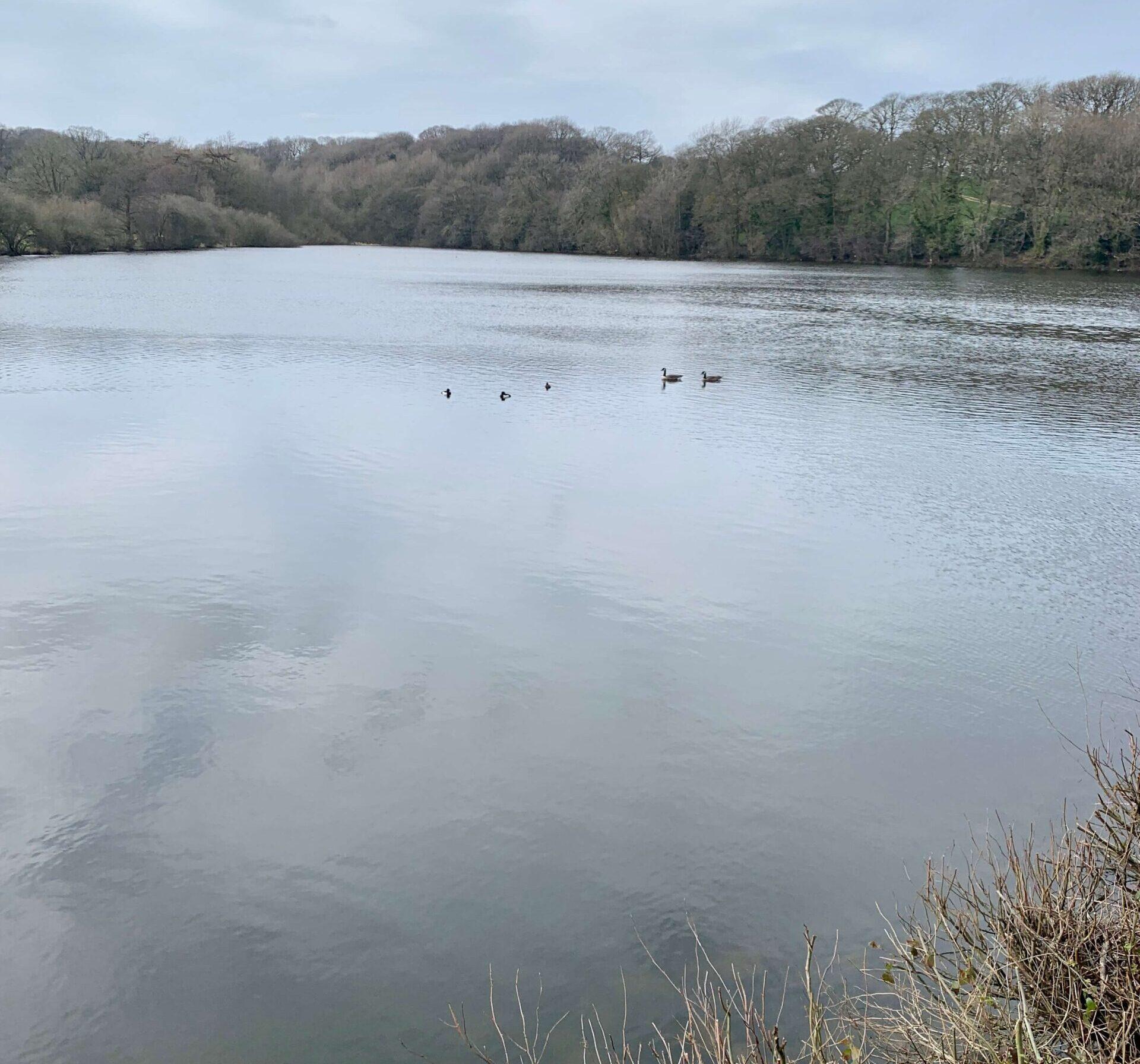Stubbings Pond